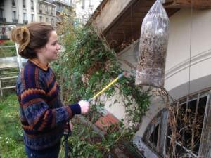 urbain farming